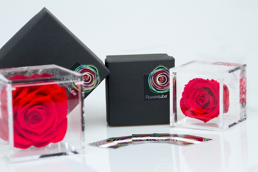 FLOWERCUBE rose vere stabilizzate-ACQUISTA ONLINE Image