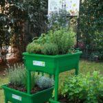 piante aromatiche chef Oldani